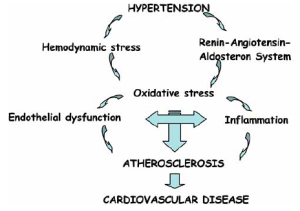 Mechanisms involved in the link between hypertension and atherosclerosis