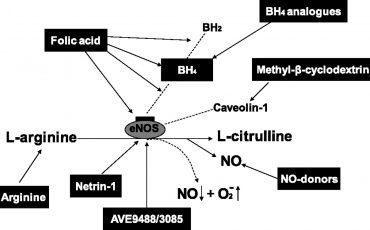 Nitric oxyt and acid folic